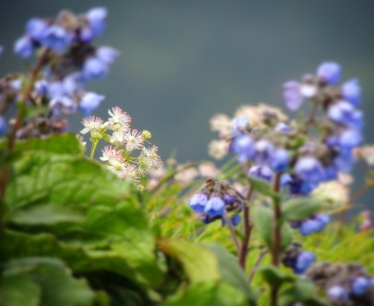 Some wild flowers @Kalsubai trek