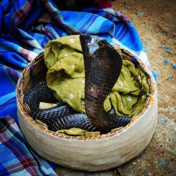 The land of snake charmers @Kutch