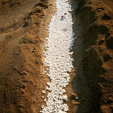 Natural white salt @Rann of Kutch